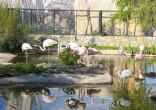 Nice flamingos scene Stock Photography