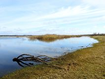 Beautiful flood field in spring, Lithuania. Nice flood field, old tree branch and grass sunny day in Silute region in spring royalty free stock photos