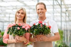 Nice florists working in the greenhouse Stock Photos