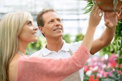 Nice florists working in the greenhouse Stock Images