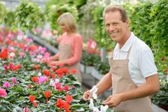 Nice florists working in the greenhouse Stock Photography