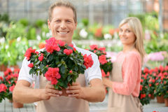 Nice florists working in the greenhouse Royalty Free Stock Image
