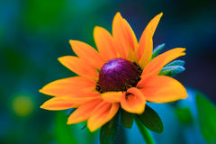 Nice flower Royalty Free Stock Images