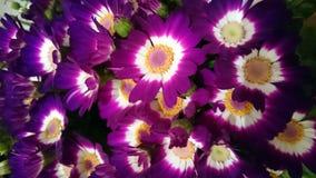 Nice flower colony stock photo