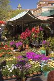 Nice Flower Market Stock Photos