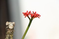 a nice red cactus flower with tree stock photo