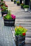 Nice flower beside walkway Stock Image