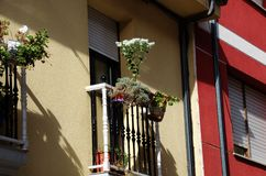 Nice flowers on the balcony. Like all rooms in the house, the balcony can be a more cozy place if we decorate it with pretty outdoor plants Royalty Free Stock Images