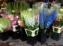 Nice - Flowers in the street market Royalty Free Stock Photo