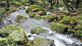 Nice Flowing mountain stream stock video footage
