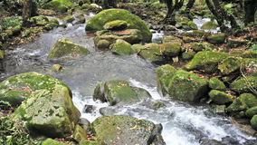 Nice Flowing mountain stream stock video