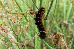 Nice fluffy caterpillar Stock Photos