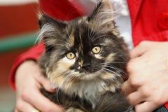 Nice fluffy kitten. Sight of a small nice fluffy kitten Stock Photo