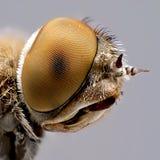 Nice fly portrait. Fly portrait taken in studio Stock Photography