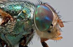 Nice fly portrait. Fly portrait taken in studio Royalty Free Stock Photos