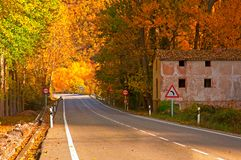 Nice forest in autumn Royalty Free Stock Photos