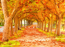 Nice forest in autumn Royalty Free Stock Image