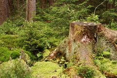 Nice forest detail Royalty Free Stock Photo