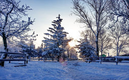Nice forest in frozen season Royalty Free Stock Image