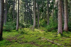Nice Forest. In Bavaria Royalty Free Stock Image