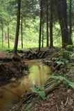 Nice forest river Stock Photography