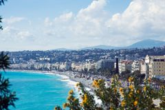 Nice Frankrike, mars 2019 En buske av gula akaciablom mot bakgrunden av det azura havet och den franska staden av Nice royaltyfri bild