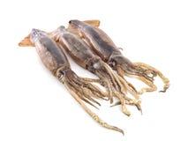 Nice fresh squid Stock Photos