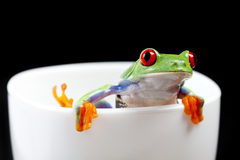 Nice frog in cup Stock Photo