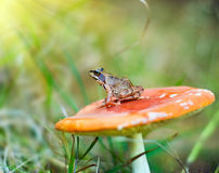 Nice frog sitting Royalty Free Stock Image