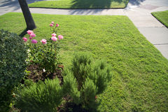 Nice front yard of house. In suburban , including tree ,lawn , garden and sidewalk ,TX USA Royalty Free Stock Photo