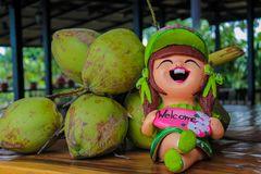 Nice garden figure of a smiling girl in asia. Country near  green coconuts Stock Photos