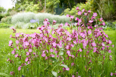 Nice garden flowers Stock Photo