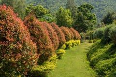 Nice garden landscape Royalty Free Stock Photos