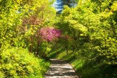 Nice garden pathway Royalty Free Stock Image