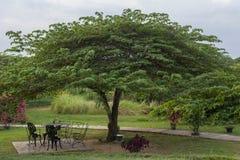 Nice garden Royalty Free Stock Image