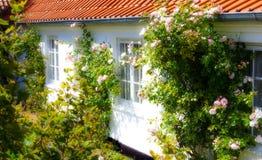 Nice garden Stock Image