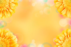 Nice gerbera flowers background Royalty Free Stock Photos