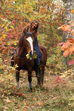 Nice girl with brown horse in autumn Stock Images