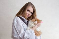 The nice girl with a red cat on hands. The young nice girl holds a red Persian cat on hands Royalty Free Stock Photos