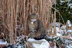 Nice gray cat in the garden in the snow Royalty Free Stock Photography