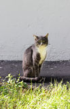 Nice gray single homeless cat with green eyes is posing outdoors Stock Photo
