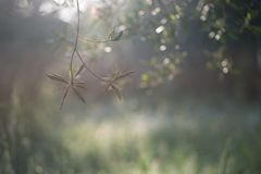 Green bokeh and natural landscape with trees, flowers and web spider in warm sunset lights. Nice green bokeh and natural landscape with trees, flowers and web stock photography