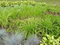 Beautiful green plants in park, Lithuania stock photo
