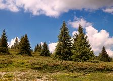 Nice green firs on a hill under the clouds stock photo