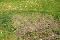 Nice green grass with big circe with just sown grass, mostly wit Royalty Free Stock Photos