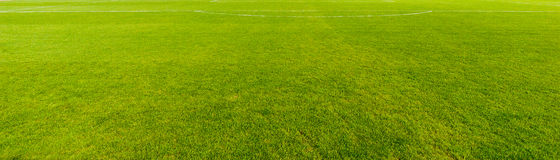 Nice Green Grass Texture Stock Photography