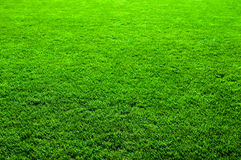 Nice Green Grass Texture Stock Photo