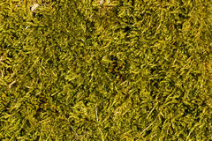 Nice green moss texture in autumn light Stock Photos