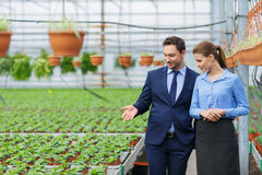 Nice greenhouse owners controlling their business Stock Photography