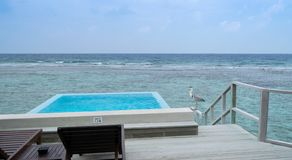 Grey heron on water bungalow terrace in Maldives stock photography